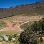 Bartinney-Wines-Blog-Elevage-Fynbos